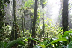 6 os mais cloudforest tropicais Foto de Stock