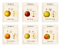 6 plates with illustrations of apple varieties Royalty Free Stock Photography