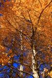 6 pomarańcze Zdjęcia Stock