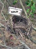 6 ptaków gniazda nieruchomości real fotografia royalty free