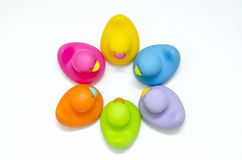 6 różnych kolorów łazienki kaczek spotkań Obrazy Royalty Free