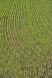 6 reflekterat riceskyvatten Royaltyfri Fotografi