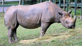 6 rhinocerous 库存图片