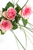 6 rosen Royaltyfria Foton