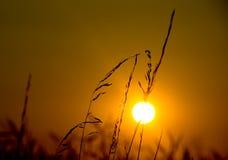 6 słońca Obrazy Royalty Free