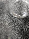 6 słonia Obrazy Royalty Free