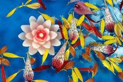 6 stearinljus blommapetals Royaltyfri Foto