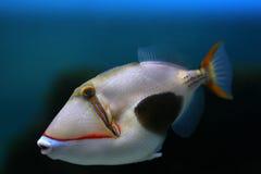 6 tropikalnych ryb Obraz Royalty Free