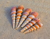 6 White and Brown Seashells on Sand at Daytime Stock Photos