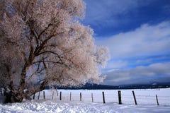 6 wiejskiej sceny zimowe Zdjęcie Stock