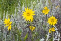 6 wildflowers fotografia stock