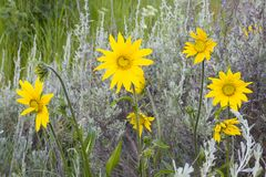 6 wildflowers στοκ φωτογραφία