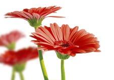 6 wiosny ogrodowa Obrazy Royalty Free