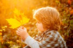 Free 6 Years Old Child Hold Autumn Leaves In A Park And Dreamind. Kid Has Dream In Fall Leaves. Autumnal Kids Mood. Royalty Free Stock Photography - 191735937