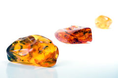 60 Million year old Baltic Amber Royalty Free Stock Photos