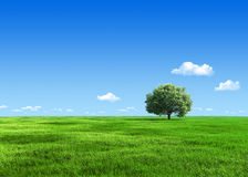 6000px nature - Green meadow 1 tree template Stock Photography