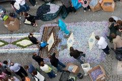 61朵地毯花 免版税库存照片
