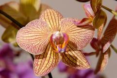 61 blommor Arkivbilder