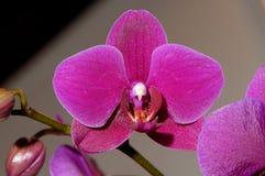 62 blommor Arkivfoto