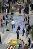 63 λουλούδια ταπήτων Στοκ φωτογραφίες με δικαίωμα ελεύθερης χρήσης