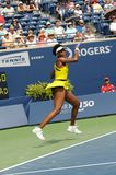 63 venus williams rogers 2009 чашек Стоковая Фотография RF