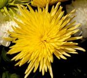 65 blommor Royaltyfri Foto