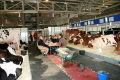 65th International Trade Fair Dairy Cattle Stock Images