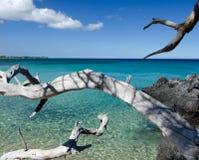 Белые сухие деревянные ветви достигая лаву трясут на пляже 69, Стоковые Фото