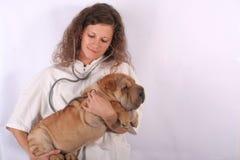 7个动物医生 图库摄影