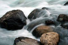 7个小河红大马哈鱼 库存图片