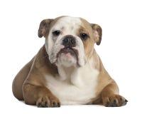 7个牛头犬英国月纵向 免版税库存照片