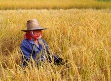 7农夫 免版税库存图片