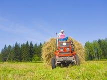 7割晒牧草西伯利亚 免版税库存照片