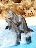 7只海豚显示 免版税库存照片