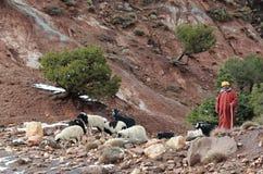 7巴巴里人摩洛哥人 免版税图库摄影