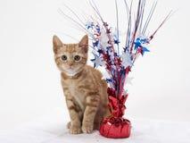 7月四日小猫 免版税库存照片