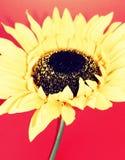7朵花黄色 免版税库存图片