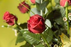 7朵花 免版税库存图片