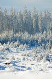 7森林没有多雪 免版税库存照片