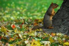 7灰鼠 免版税库存照片