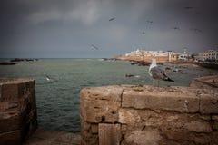 7颗城市essaouira摩洛哥老葡萄牙 库存照片