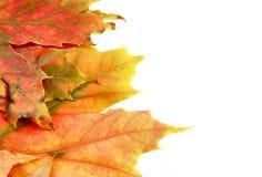 7 χρώματα φθινοπώρου Στοκ Εικόνες