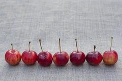 7 красных яблок на ткани Стоковая Фотография