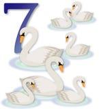7 12只圣诞节天鹅游泳 免版税库存照片