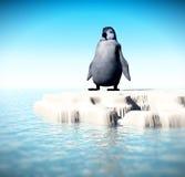 小的失去的企鹅7 免版税库存照片