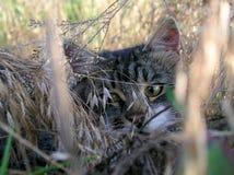 7猫 免版税库存图片