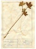 7 30干燥标本集页 库存图片