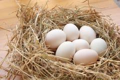 7 яичек утки на соломе Стоковые Фотографии RF