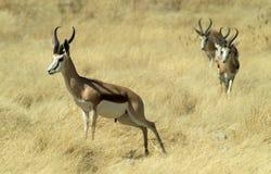 7 afrikanska djur Royaltyfri Foto