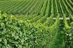 7 baden den bergiga vingården Royaltyfria Bilder